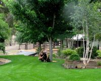 Shaded_Sweeping_lawn