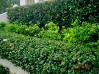 Tiered_Hedge